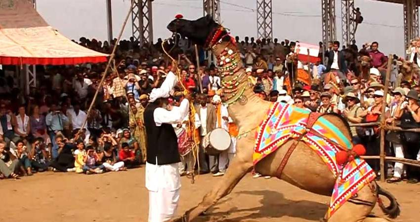 Luxury Tour of Golden Triangle with Pushkar artiodactyl honest with the best price
