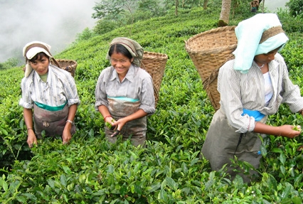 Darjeeling Tour Package Cost From Hyderabad